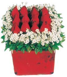 Çankırı çiçek online çiçek siparişi  Kare cam yada mika içinde kirmizi güller - anneler günü seçimi özel çiçek