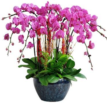 9 dallı mor orkide  Çankırı hediye çiçek yolla