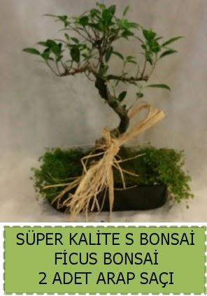 Ficus S Bonsai ve arap saçı  Çankırı çiçek servisi , çiçekçi adresleri