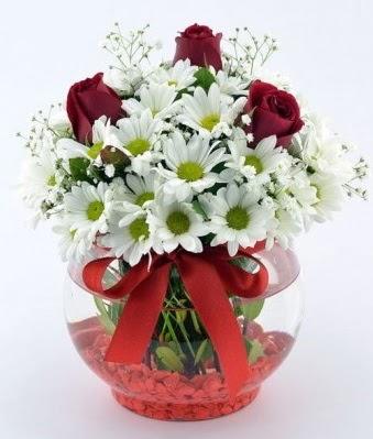 Fanusta 3 Gül ve Papatya  Çankırı İnternetten çiçek siparişi