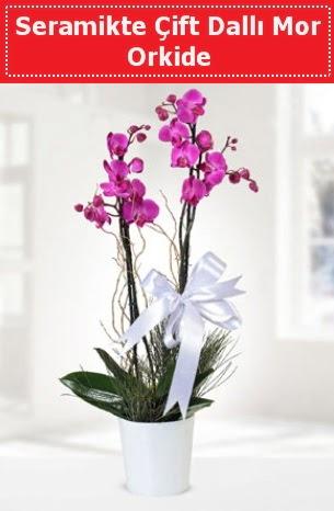 Seramikte Çift Dallı Mor Orkide  Çankırı çiçekçi mağazası