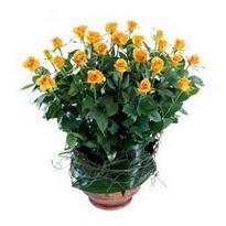 Çankırı çiçek , çiçekçi , çiçekçilik  10 adet sari gül tanzim cam yada mika vazoda çiçek