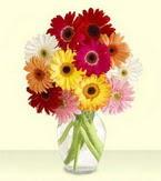 Çankırı uluslararası çiçek gönderme  cam yada mika vazoda 15 özel gerbera