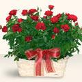 Çankırı 14 şubat sevgililer günü çiçek  11 adet kirmizi gül sepette