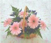 gerbera çiçeklerinde sepet   Çankırı hediye sevgilime hediye çiçek