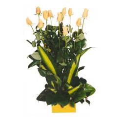 12 adet beyaz gül aranjmani  Çankırı çiçek siparişi vermek