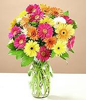 Çankırı internetten çiçek satışı  17 adet karisik gerbera