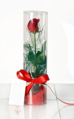 Çankırı hediye sevgilime hediye çiçek  Silindir vazoda tek kirmizi gül