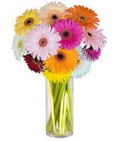 Çankırı çiçek yolla  Farkli renklerde 15 adet gerbera çiçegi
