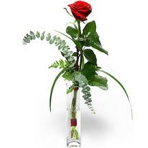 Çankırı hediye çiçek yolla  Sana deger veriyorum bir adet gül cam yada mika vazoda