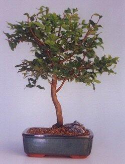 Çankırı güvenli kaliteli hızlı çiçek  ithal bonsai saksi çiçegi  Çankırı çiçekçi mağazası