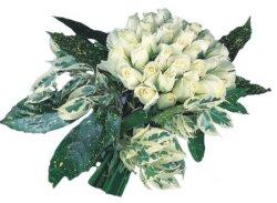 Çankırı çiçek yolla  9 Beyaz gül Özel kisiler için