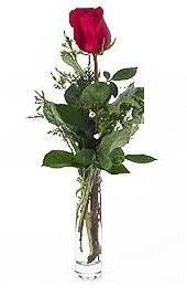 Vazo içerisinde 1 adet kirmizi gül  Çankırı çiçek , çiçekçi , çiçekçilik