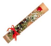 1 adet kirmizi gül  Çankırı çiçek servisi , çiçekçi adresleri