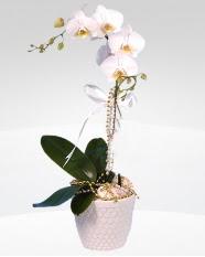 1 dallı orkide saksı çiçeği  Çankırı cicekciler , cicek siparisi