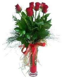 vazo içerisinde 5 kırmızı gül  Çankırı online çiçek gönderme sipariş