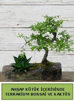 Ahşap kütük bonsai kaktüs teraryum  Çankırı çiçek yolla