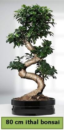 80 cm özel saksıda bonsai bitkisi  Çankırı çiçek servisi , çiçekçi adresleri