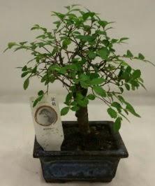Minyatür ithal japon ağacı bonsai bitkisi  Çankırı çiçek mağazası , çiçekçi adresleri