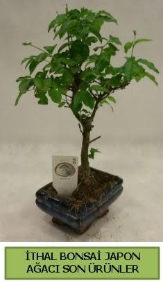 İthal bonsai japon ağacı bitkisi  Çankırı çiçek siparişi sitesi