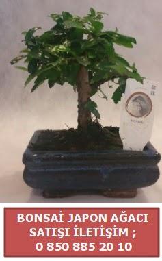 Japon ağacı minyaür bonsai satışı  Çankırı çiçek mağazası , çiçekçi adresleri