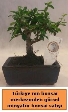 Japon ağacı bonsai satışı ithal görsel  Çankırı hediye sevgilime hediye çiçek