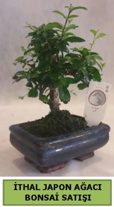 İthal japon ağacı bonsai bitkisi satışı  Çankırı çiçek servisi , çiçekçi adresleri