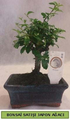 Minyatür bonsai ağacı satışı  Çankırı çiçek online çiçek siparişi