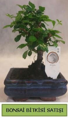 Bonsai ithal görsel minyatür japon ağacı  Çankırı güvenli kaliteli hızlı çiçek