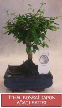 İthal küçük boy minyatür bonsai ağaç bitkisi  Çankırı çiçek servisi , çiçekçi adresleri