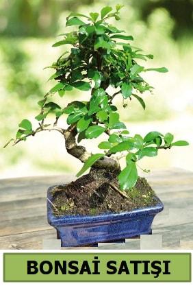 Çam bonsai japon ağacı satışı  Çankırı çiçek mağazası , çiçekçi adresleri