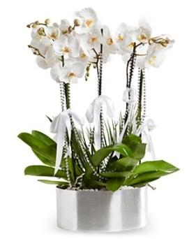 Beş dallı metal saksıda beyaz orkide  Çankırı hediye sevgilime hediye çiçek