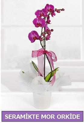 Seramik içerisinde birinci kalite tek dallı mor orkide  Çankırı 14 şubat sevgililer günü çiçek