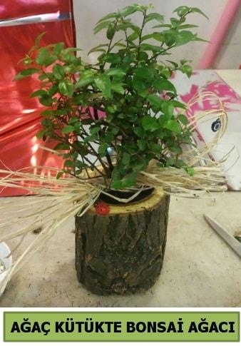 Doğal ağaç kütük içerisinde bonsai ağacı  Çankırı anneler günü çiçek yolla