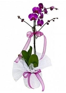 Tekli Mor Orkide  Çankırı hediye sevgilime hediye çiçek