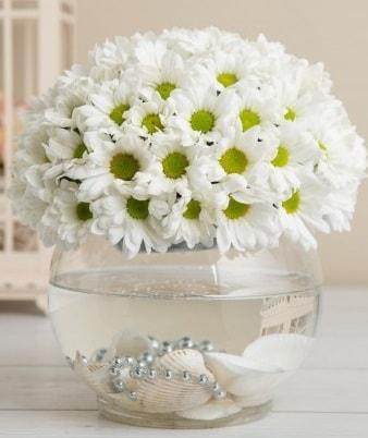 Fanusta beyaz Papatya  Çankırı çiçek mağazası , çiçekçi adresleri